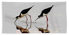 Two Black Neck Stilts Eating Beach Sheet by Tom Janca
