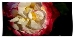 Beach Sheet featuring the photograph Two Color Rose by David Millenheft