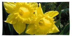 Beach Towel featuring the photograph Two Daffodils by Kathy Barney