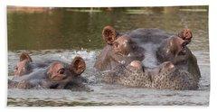 Two Hippopotamus Hippopotamus Amphibius Beach Towel by Panoramic Images