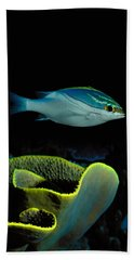 Two-lined Monocle Bream Scolopsis Beach Towel