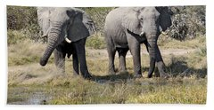 Beach Towel featuring the photograph Two Male Elephants Okavango Delta by Liz Leyden