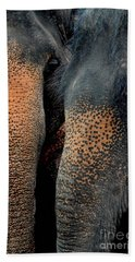 Beach Towel featuring the photograph Two Pals by Michelle Meenawong