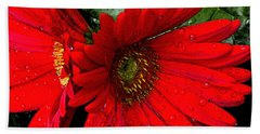Red Daisy Beach Towel
