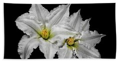 Two White Clematis Flowers On Black Beach Towel by Jane McIlroy