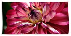 Dahlia Unfolding Beach Sheet by Athena Mckinzie