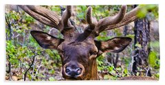 Beach Towel featuring the photograph Up Close And Personal With An Elk by Bob and Nadine Johnston