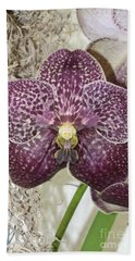 Vanda Robert's Delight Beach Sheet