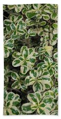 Variegated Coprosma Replens Beach Towel