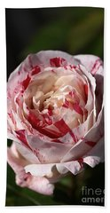 Beach Sheet featuring the photograph Variegated Rose by Joy Watson