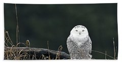 Vermont Snowy Owl Beach Sheet