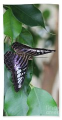 Violet Clipper Butterfly Beach Towel