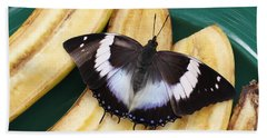 Violet-spotted Charaxes Butterfly Beach Towel