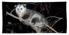 Virginia Opossum Beach Towel