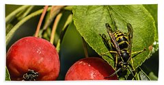 Wasp - A Sweet Tooth. Beach Towel