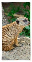 Watchful Meerkat Vertical Beach Towel by Jon Woodhams