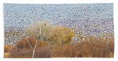 Beach Sheet featuring the photograph Watching Over The Flock by Bryan Keil