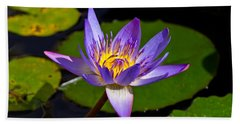 Water Lily  Beach Towel by Scott Carruthers