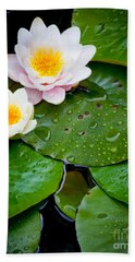 Water Lily Study Beach Towel