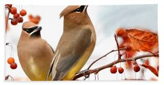 Beautiful Waxwing  Beach Towel by Nava Thompson