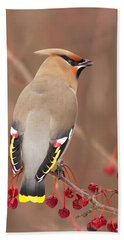 Waxwing In Winter Beach Towel by Mircea Costina Photography