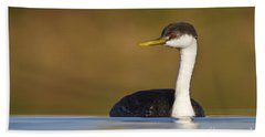 Beach Sheet featuring the photograph Western Grebe On The Lake by Bryan Keil