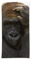 Western Lowland Gorilla With Hand Beach Towel by San Diego Zoo