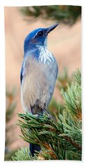 Western Scrub Jay Beach Sheet