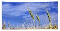 Beach Towel featuring the photograph Wheat Trio by Keith Armstrong