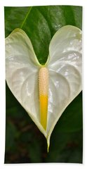 White Anthurium Heart Beach Towel by Venetia Featherstone-Witty