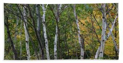 Beach Towel featuring the photograph White Birches In The Woods by Denyse Duhaime