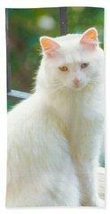 White Cat Beach Sheet
