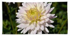 White Dahlia Flower Beach Sheet