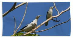 White-headed Starlings Havelock Isl Beach Towel by Konrad Wothe