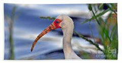 Intriguing Ibis Beach Towel by Al Powell Photography USA