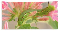 White-lined Sphinx Moth Caterpillar Beach Towel