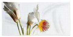White Sparmannia Africana Plant. Beach Sheet
