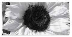 Beach Towel featuring the photograph White Sunflower by Jeannie Rhode
