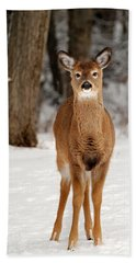 Whitetail In Snow Beach Towel by Christina Rollo