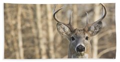 White-tailed Buck Beach Towel