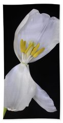 White Tulip On Black Beach Sheet