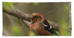 White-winged Crossbill Beach Towel by James Peterson