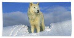 White Wolf In The Snow Idaho Beach Towel