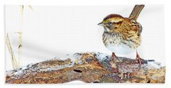 Whitethroated Sparrow On Snow-dusted Tree Branch Digital Art Beach Towel