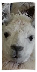 Beach Towel featuring the photograph Who Me Llama by Caryl J Bohn