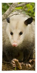 Who Says Possums Are Ugly Beach Towel