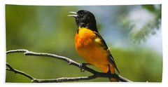 Wild Birds - Baltimore Oriole Beach Sheet by Christina Rollo