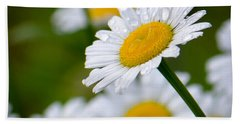 Wild Daisies After The Rain Beach Towel by Amy Porter