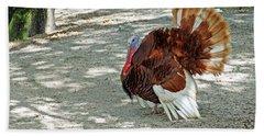 Wild Turkey Beach Towel by Aimee L Maher Photography and Art Visit ALMGallerydotcom