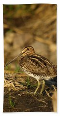 Wilson's Snipe Beach Towel by James Peterson